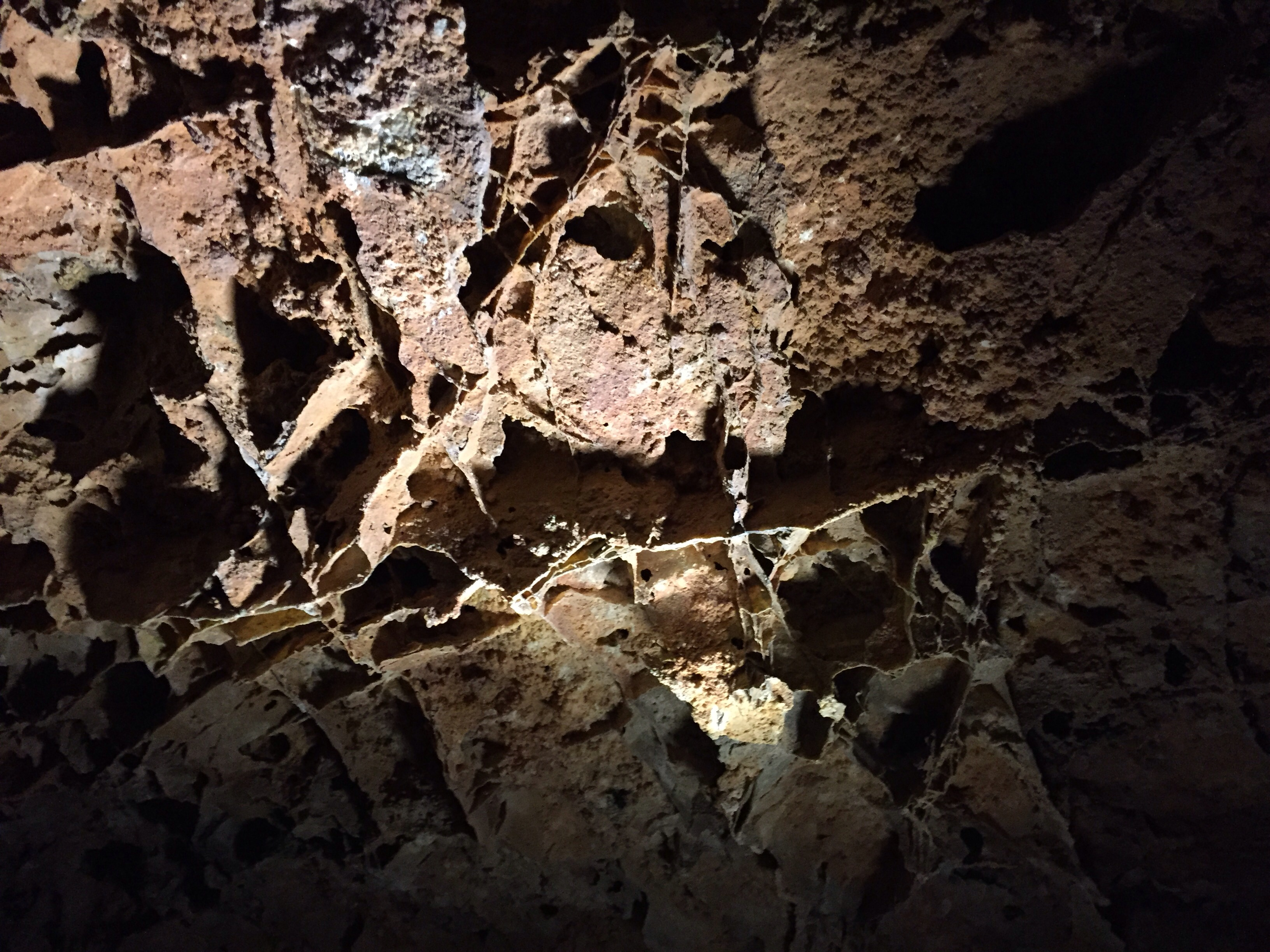 cave bat thesis White-nose syndrome (wns pseudogymnoascus destructans) is responsible for the regional population collapse of many cave-hibernating bat species, including the.